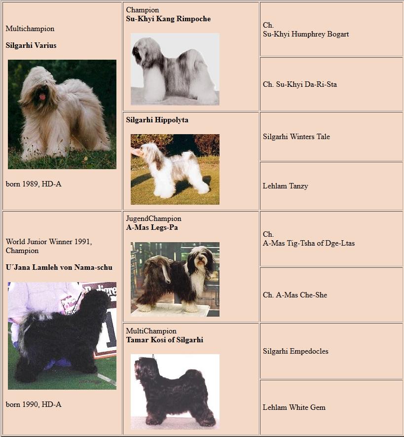 Dschowo pedigree